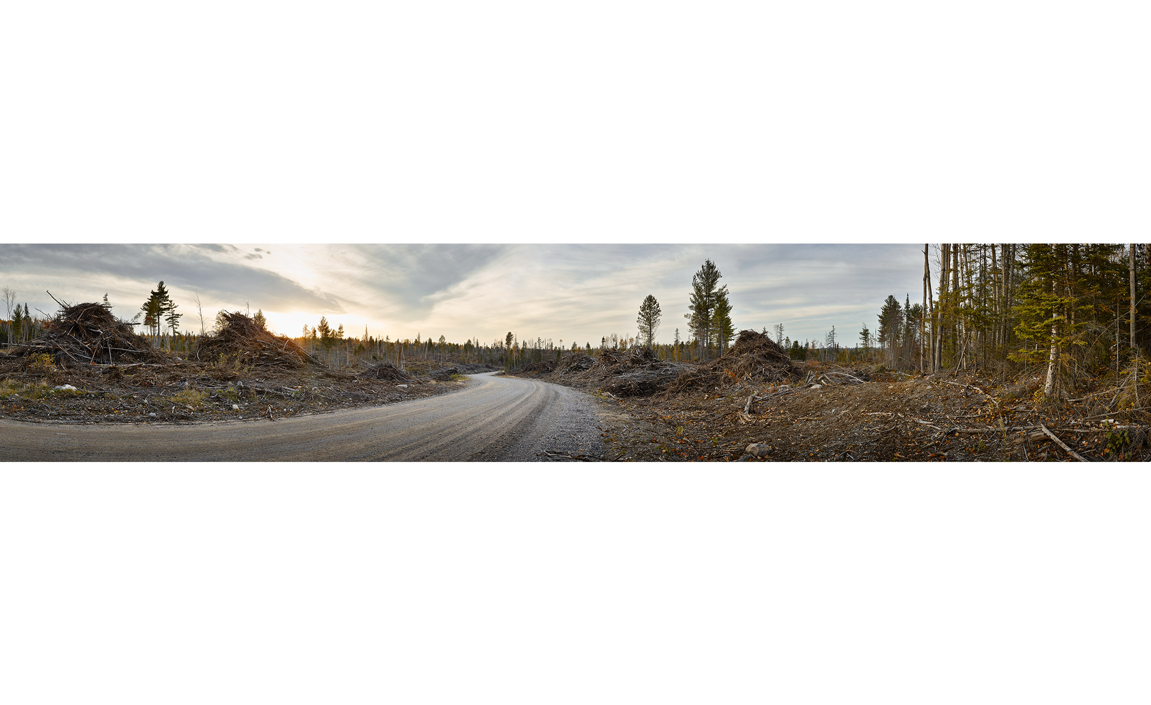 Portelance-Road-Clearcut-1